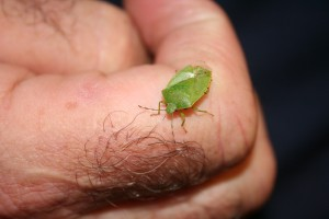 The Leaf Hopper which went on the Wizard's Adventure